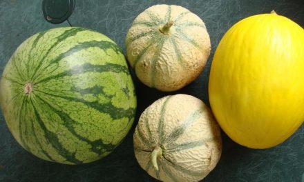 Le melon et la pastèque…