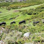 Prime à la Fraude en Corse: ANTICOR persiste et signe